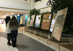 Black History Poster display at the Canadian Caribbean Association of Halton Black History Month event 2015